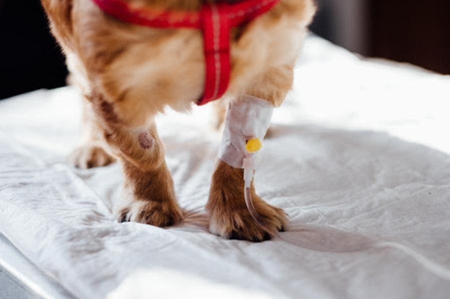 Hundeversicherung 3