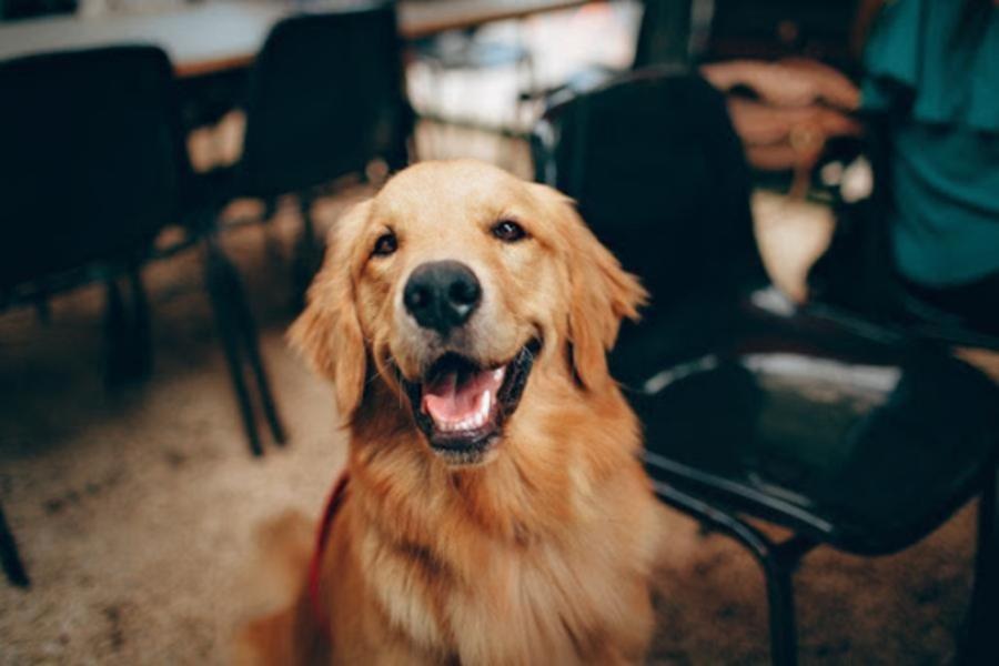 Hundeversicherung 2