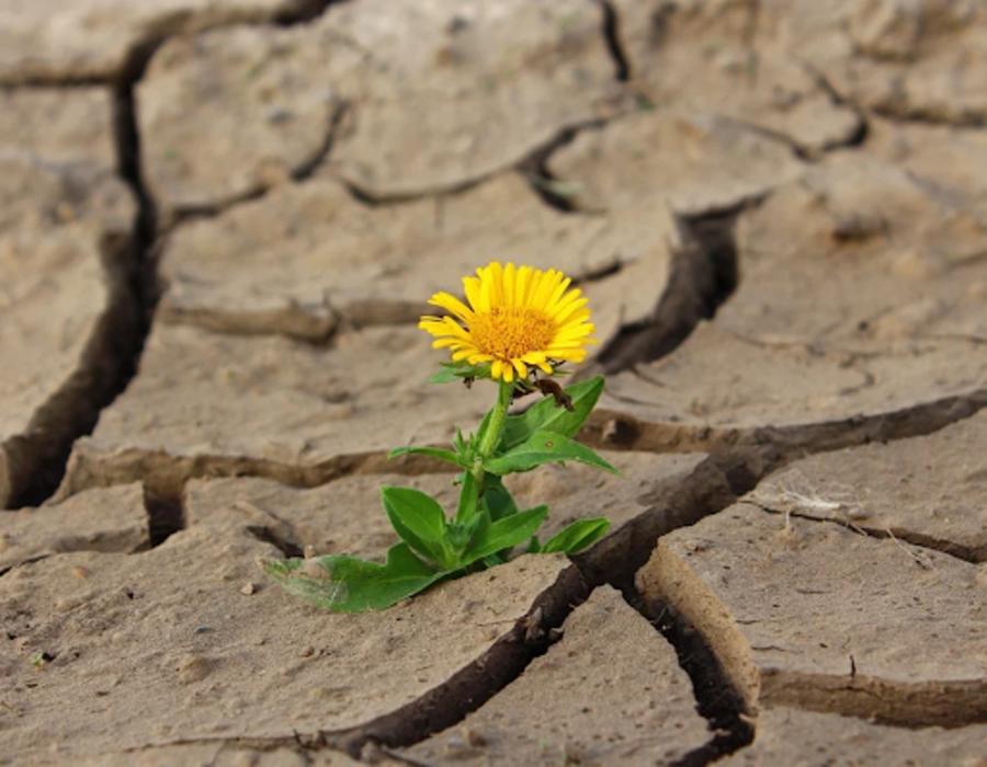 Blume in trockenem Boden